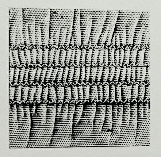 シューベルト 51C(4本針飾縫ミシン)の縫見本