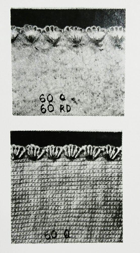 メロー60Qの縫見本