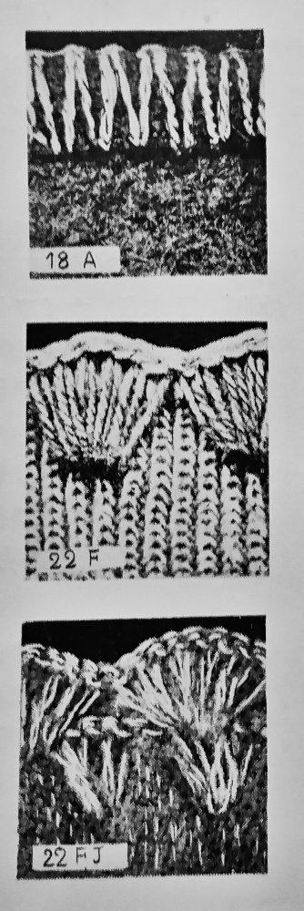 メロー18A、メロー22F、メロー22FJの縫見本