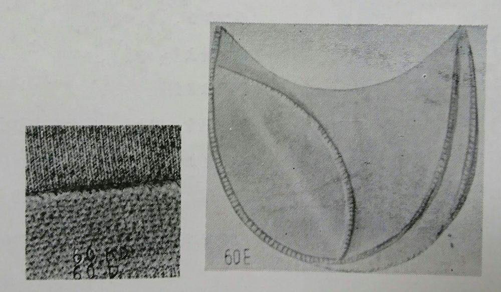 メロー60シリーズの縫見本